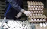 طوفان تخم مرغ در بازار