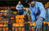 قیمتهای بی قاعده در میدان میوه!