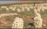 بی انگیزگی کشاورزان با صعودی شدن هزینه ها